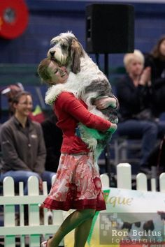 Joyful dog show moments Petit Basset Griffon Vendeen, Griffon Dog, I Love Dogs, Puppy Love, Cute Dogs, Hound Dog, Basset Hound, Unusual Dog Breeds, Feel Good Pictures