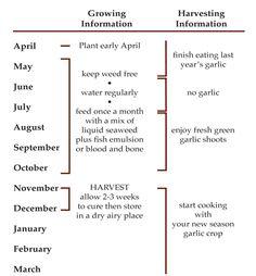 the garlic year Organic Gardening, Farmer, Garlic, Plants, Knowledge, Foods, Green, Food Food, Consciousness