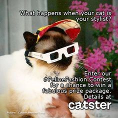 Enter Catster's #FelineFashion contest for a chance to win furrrr-bulous prizes from Pretty Snake, Catladyland, and Catsparella!