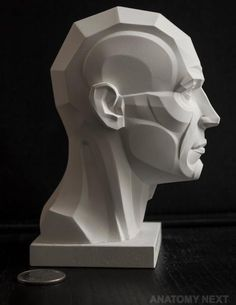 https://www.facebook.com/Anatomy4Sculptors/photos/pcb.954025404696609/954024981363318/?type=3