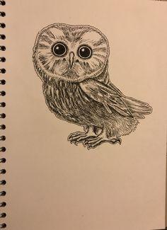 Caroline Songi Cook Little Owl