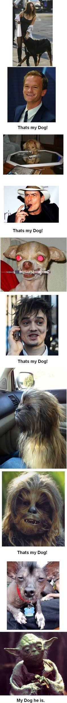 Wie der Hund, so dass Herrchen