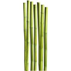 Sticker Bambous, 58 x 168 cm | Leroy Merlin