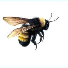 ... Bee Tattoo on Pinterest |