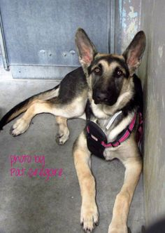 UPDATE: 6/28/15 ADOPTED!! California - Please Share - Sponsor for Rescue - Foster