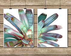 Imperial Bromeliad Watercolor Set of 2 Diptych Botanical Prints - Wall Art Home Decor Painting Poster Floral Art Watercolour Giclee Prints