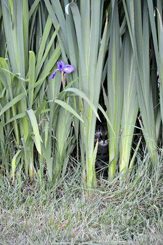Creep Cat