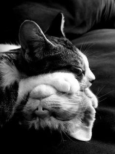Stack of gatos :P Pretty Cats, Beautiful Cats, Animals Beautiful, Beautiful Creatures, Baby Animals, Funny Animals, Cute Animals, Nature Animals, Animal Memes