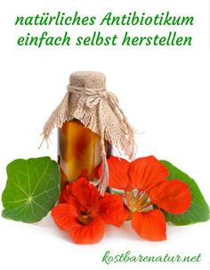 Natürliches Antibiotikum mit Kapuzinerkresse und Meerrettich Nasturtium and horseradish have an antibiotic effect and help with colds, bronchitis, cough and much more. Diy Beauty, Beauty Hacks, Beauty Tips, Natural Antibiotics, Self Care Routine, Alternative Medicine, Natural Medicine, Skin Care Tips, How To Memorize Things