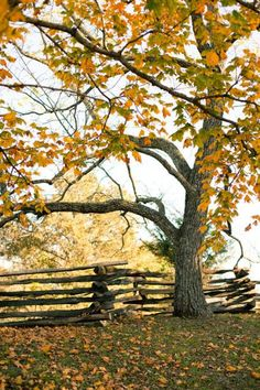 falling leaves and split rail fence sing autum's song -- Anticipating Autumn | Everyday Living