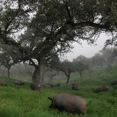 Dehesa de Extremadura - the pigs here produce excellent jamón  http://www.todoextremadura.com