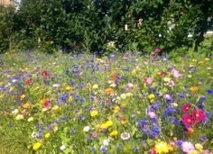 Chatsworth Gardens #Magnificent #ColoursOfTheRainbow #Derbyshire #Home