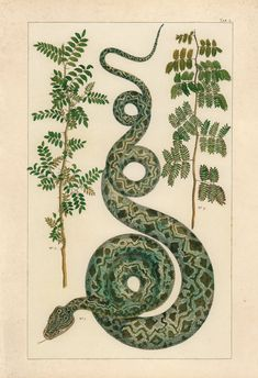 ANTIQUE NATURE PRINT Vintage Serpent Print by EncorePrintSociety