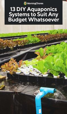 Did you know it is possible to have your own aquaponics system no matter what space you have available? Read here to see how to make it a reality! gardening diy aquaponics 13 DIY Aquaponics Systems to Suit Any Budget Aquaponics Greenhouse, Backyard Aquaponics, Aquaponics Fish, Aquaponics System, Hydroponic Gardening, Organic Gardening, Fish Farming, Vertical Farming, Container Gardening
