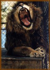Cat Tales Zoo, just north of Spokane