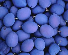 Periwinkle plums
