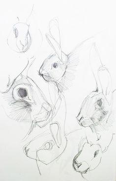 Croquis dessin squelette animaux chimpanz poisson pigeon - Croquis animaux ...