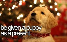I remember getting Sam on Christmas Eve!!! And Elmer was a early Christmas present:)