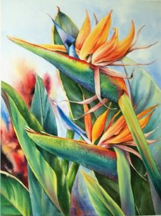 Birds of Paradise by Sandy King ~ 30 x 22 King Painting, Plant Painting, Watercolor Flowers, Watercolor Paintings, Painting Flowers, Watercolors, Bald Eagle Barns, Exotic Birds, Colorful Birds