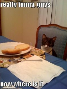 Very Funny Pictures With Captions | Very Funny Cat Pictures With Captions