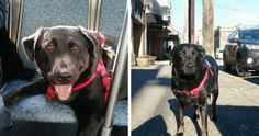 Very Good Dog Rides the Bus All by Herself to Go to the Park