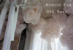 My Shabby Streamside Studio: My Big Tissue Paper Roses