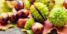 Horse chestnut has been used for centuries to help promote vascular health and as a natural remedy for hemorrhoids. Natural Remedy For Hemorrhoids, Natural Remedies, Chestnut Horse, Natural Healing, Good To Know, Health Benefits, Healthy Living, Treats, Fruit