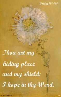 You truly are my hiding place, oh Lord!  Let me always find rest in the Holy King of heaven!