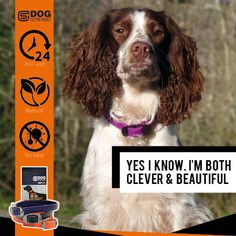 DOG StreamZ® unique dog collars introduce a new magnetic technology for dogs - ideal for all dogs of any age. Non invasive process creating no heat. Suitable for use. Endorsed by champions. Cat Care Tips, Dog Care, Dog Kennel Designs, Unique Dog Collars, Dog Playground, Pumpkin Dog Treats, Hip Dysplasia, Dog Agility, Homemade Dog Food