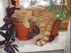 Cats need to feel the earth.
