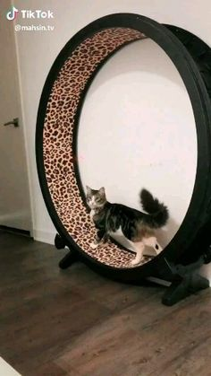 7 Cool and Interesting Facts About Cats That You May Not Know About You Must Check The Link,Funny, Funny Categories Fuunyy 7 Cool and Interesting Facts About Cats That You May Not Know About You Must Check The Link Source by horsesgood. Funny Animal Memes, Funny Animal Videos, Funny Animal Pictures, Cat Memes, Funny Cats, Cute Little Animals, Cute Funny Animals, Cute Cats, Video Chat