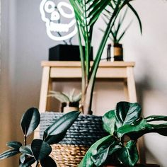 """4 Likes, 3 Comments - Sarah Kwan (@sabahstyles) on Instagram: """"Half the indoor plants I've had don't survive, so the picture will last longer #indoor…"""""""