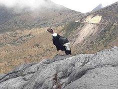 🥇Parque nacional natural los nevados - Senderismo Colombia Travel Plan, Hiking Trails, Natural Playgrounds, Volcanoes, National Parks, Waterfalls