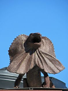 Animal Fact of the Day: The Frilled Neck Lizard was pictured on Australia's two cent coin. The two cent coins are no longer in circulation.