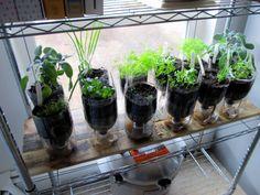 Self-watering culinary herb garden Growing Herbs, Growing Flowers, Water Garden, Herb Garden, Inside Garden, Garden Windows, Container Gardening, Indoor Gardening, Herbs Indoors