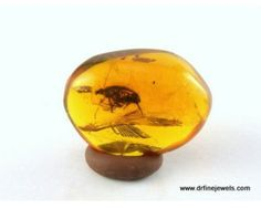 Amber fossils are one of nature's great treasures.Know more:http://www.drfinejewels.com/Amber-Fossil
