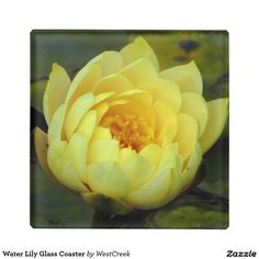 Water Lily Glass Coaster. Bright yellow flower will go great with spring colors.