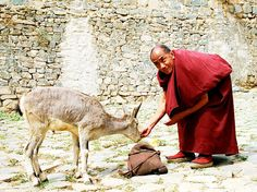 Kindness in Tibet 'The good shine like the Himalayas, whose peaks glisten above the rest of the world even when seen from a distance. Others pass unseen, like an arrow shot at night.' The Dhammapada