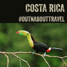Once again we are giving away the grand prize trip to #costarica at #winnipegfolkfestival. #outnabouttravel #adventure #travel #travelagent #travesolo_notalone