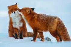 a2015-2-16animals-love-couple-10__880.jpg