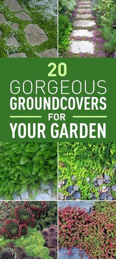 If you're tired of your regular grass lawn these gorgeous creeping plants are great alternatives. They are an excellent substitute for a grass lawn while some of them are suitable for rock gardens and poor-soil landscapes. They are even a great solution for badly built garden paths because they easily fill the cracks. What's more they are mostly low-maintenance plants and they bear up to heavy foot traffic! Check out these gorgeous stepable groundcovers that will make a wonderful statement…