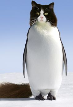 Pets Are Being hilariously Photoshopped Onto Penguins - World's largest collection of cat memes and other animals I Love Cats, Cute Cats, Photoshopped Animals, Cat Pen, Hybrid Art, Funny Animals, Cute Animals, Animal Mashups, Funny Photoshop