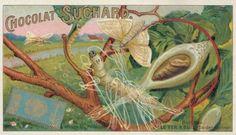 Filatura del bozzolo del bombice, 1905
