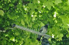 La Buhardilla de Yaya: Vigilando    En el centro de #Granada, en la plaza de la Trinidad, miramos hacía arriba y nos encontramos en una antena una paloma vigilante.     Datos fotografía:     - ISO 100     - Apertura: F 5'6     - Exposición: 1/10     - Focal: 55mm