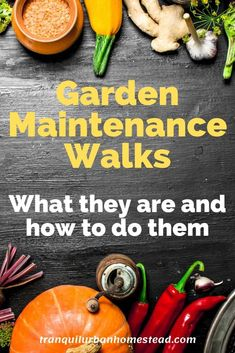 Garden Maintenance Walk: The Best Way To Keep on Top of Things : Do you want to keep on top of what is going on in your garden? Taking a regular garden maintenance walk will help you grow better vegetables and fruit. Organic Gardening, Gardening Tips, Prune Fruit, Backyard Layout, Japanese Beetles, Garden Storage Shed, Plant Diseases, Garden Maintenance, Weed Control