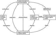 7 best carbon cycle images on pinterest earth science geography simple carbon cycle ccuart Choice Image