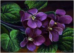 wild violet painting images | Purple Violets: Spring Wildflowers, original painting by artist Paul ...
