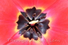 """ kaleidoscope"" nature print of the center of a tulip.   5X5 $22.95 Other options available on website."
