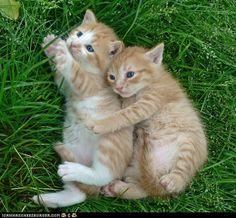 funny pictures - Cyoot Kittehs of teh Day: A Cuddle in the Grass