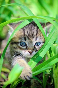magical-meow: Photo by Yana K